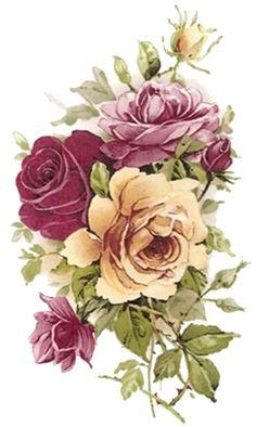 .purple and cream roses