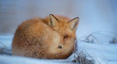 phlebotomy in new Jersey Tier Wallpaper, Animal Wallpaper, Nature Wallpaper, Find Your Spirit Animal, Animals Beautiful, Cute Animals, Friendly Fox, Walt Disney Quotes, Photo Animaliere
