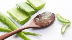 Benefity aloe vera. Snižuje hmotnost a brání vypadávání vlasů