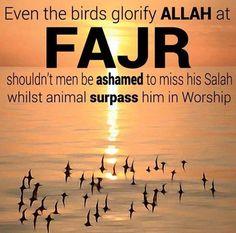Even the Birds glorify Allah at FAJR shouldn't men be ashamed to miss his Salah whilst animals surpass him in worship fajr ~Amatullah Islam Hadith, Islam Quran, Alhamdulillah, Islamic Inspirational Quotes, Islamic Quotes, Islamic Dua, Allah God, Muslim Quotes, Muslim