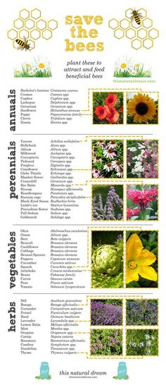 creating a bee friendly garden- plants to attract and feed beneficial bees. save the bees!