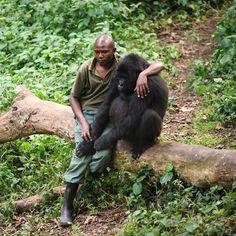 Gorilla in our midst