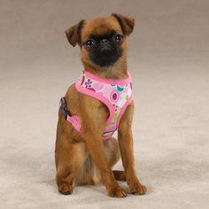 Casual Canine Mod Print Fabric Dog Harnesses
