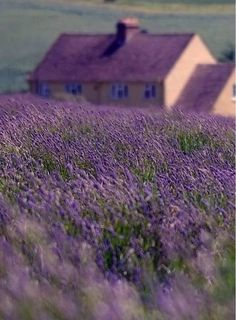 How does a retreat to the Lavender Farm Quest House in the #CapeTown winelands sound? Great? No, really, really great.