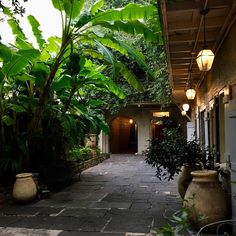 "285 Likes, 8 Comments - Thad Hayes (@thadhayesinc) on Instagram: ""Courtyard with bananas and citrus trees.  #neworleans #satsuma #olivejar #courtyard #frenchquarter"""