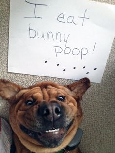 25+ Asshole Dogs Being Shamed For Their Crimes