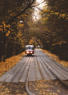 Shared by Antonina. Find images and videos about nature, travel and autumn on We Heart It - the app to get lost in what you love. Autumn Cozy, Autumn Trees, Autumn Leaves, Autumn Fall, Happy Autumn, Autumn Harvest, Hello Autumn, Winter, Fall Inspiration