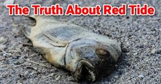 The Truth About The Tampa Bay Red Tide & Piney Point