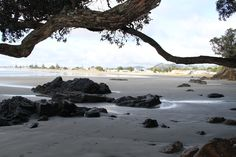 From the North End - Waihi Beach