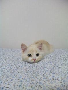 kitten loaf