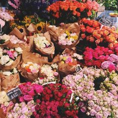 these flowers are beautiful
