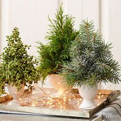 Love the look of a tabletop tree? Bring it to your holiday table. Transfer mini pine trees to white vases and arrange on a silver platter. Accent the trees with copper twinkle lights for a chic centerpiece./
