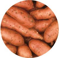 Researchers reveal sweet potato as weapon against diabetes