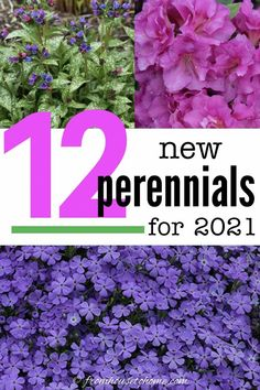 I've been wanting to know more about the best new perennials for 2021 and this article has helped me out so much. It really is a great way to find some great perennials that bloom all summer and learn which ones are the best new shade perennials for your garden. #fromhousetohome #perennials #2021 #shadeperennials