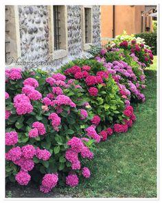 Ortensie,hydrangea,flowers, colors,garden,giardino,giardinaggio, countrychic, beautiful