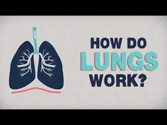 """""""Lungs inhale and exhale between 15 and 25 times a minute, which amounts to an incredible 10,000 liters of air each day.""""  A look inside our incredible respiratory system:"""