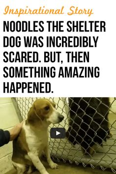 Such a wonderful story of a scared shelter dog who found a wonderful new home. #inspirational