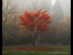 Peter Hammill- Autumn