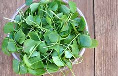Is watercress good for you? 10 Health benefits of watercress in your nutrition plan. Easy watercress salad recipe and juice recipe. How to store watercress. Watercress Benefits, Watercress Recipes, Watercress Salad, Arugula, Superfoods, Most Nutritious Vegetables, Cooking Vegetables, Herbs For Hair Growth, Most Nutrient Dense Foods