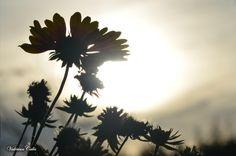 Fleurs d'ombre by Valérian Calès on 500px