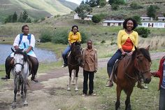 Horse Farms, Horse Breeds, South Africa, Pony, Horses, Animals, Art, Africans, Africa