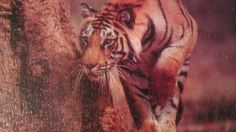 Tiger puzzle finished 4/7/15