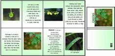 Imprimibles libros y revistas - LUNALUNERA (Mamen) - Picasa Web Albums
