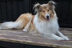 Name: Heidi, Breed: Dog