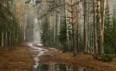 Последний снег Автор ДмитрийВладимирович