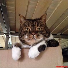 awwww! Cute! — My Brother's Cat Bam Bam (Source:...
