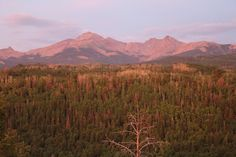 Drought May Stunt Forests' Ability to Capture Carbon | Climate Central
