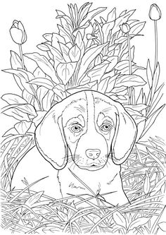 Welcome to Dover Publications - CH Lovable Cats and Dogs Puppy Coloring Pages, Flower Coloring Pages, Coloring Book Pages, Coloring Sheets, Mandala Coloring, Colorful Drawings, Colorful Pictures, Cat Drawing, Dog Cat