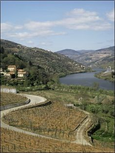 size: Photographic Print: Vineyards of Quinta Do Mourao, Near Regua, Portugal by Sheila Terry : Artists Porto Portugal, Spain And Portugal, Galerie Creation, Douro Valley, Portuguese Tiles, Beach Landscape, Wine Country, Places To See, The Good Place