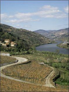 Vineyards of Quinta Do Mourao, Near Regua, Portugal