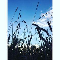 #HighVoltagePix.com #OnMyWay #AmazingNature #LoveMyJob #Freedom #Love #Remember #LoveYourLife #beStraight #MunichLove #münchen #motd #potd #Munich #Photography #Instaphoto #photooftheday #Photographer #pictureoftheday #landscape #artwork #neverforget #MizzVanMunichPhotography #ImpressionsByNature