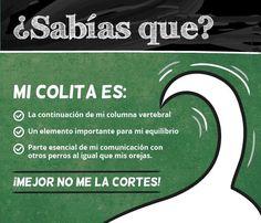 NO MAS CRUELDAD!! NO MAS CORTE DE COLITAS Y OREJAS A LOS PERROS!!