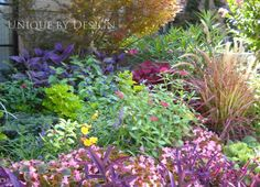 A fun pastel combo of Persian Sheild, Fireworks grass, oleander, penta, black n blue salvia, coleus, begonia and purple heart.