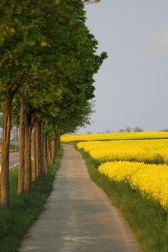 Blieskastel im Saarland. Hier die Rapsblüte. Es ist einfach eine schöne Region das Saarland.