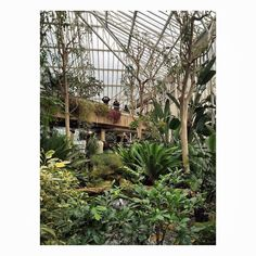 The Barbican Conservatory ..... Located on the 3rd floor of the Barbican Centre . Worth a visit . Check website for opening times . Limited to Sunday's .  Photo Credit Laura Elizabeth  Instagram Thetaintedcherry