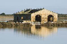 Vendicari Natural Reserve, province of Siracusa - Sicily
