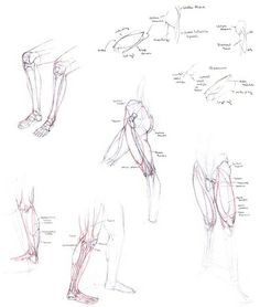 anatomy drawing   Figure Anatomy Study Drawing - Legs and Feet   Flickr - Photo Sharing!
