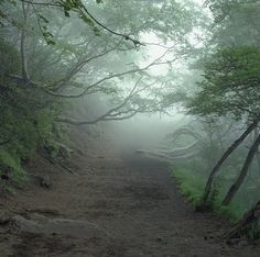 Creepy Aokigahara Forest in Japan