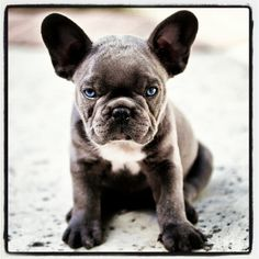 The meanest little puppy in the world.