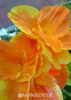 Close Up - flower :: Credit: Anthony Tesselaar
