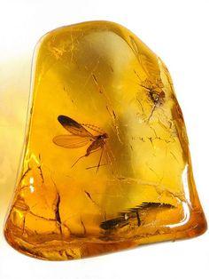 Baltic amber (40-50 MYO) - Biting midge (Ceratopogonidae) by leth.damgaard, via Flickr