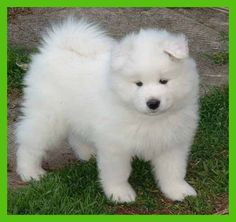 dogs ~ Large Grooming a dog :... I love #dog #favorite