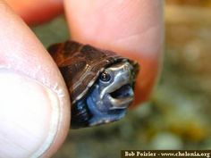 Tiny turtle would like to be put down please.
