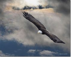 Rise Above the Storm -- by Robert Bartow
