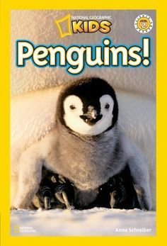 7 best Easy Reader Books  Nonfiction images on Pinterest   Non     National Geographic Readers  Penguins  by Anne Schreiber  National  Geographic KidsNonfictionInformational