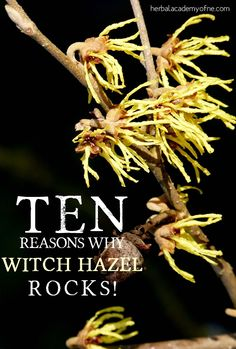 10 Reasons Why Witch Hazel Rocks